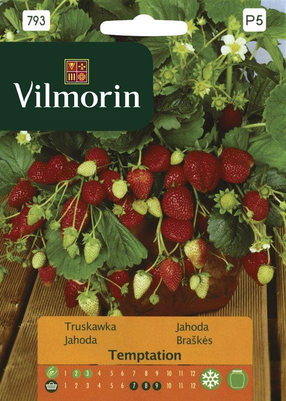 Truskawka Temptation - Vilmorin-0