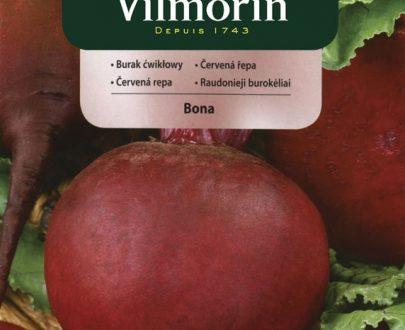 Burak ćwikłowy Bona - Vilmorin-0