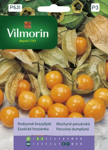 Rodzynek brazylijski - Vilmorin-0