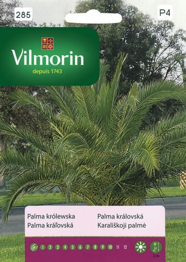Palma królewska - Vilmorin-0