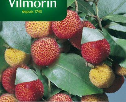 Drzewo truskawkowe - Vilmorin-0