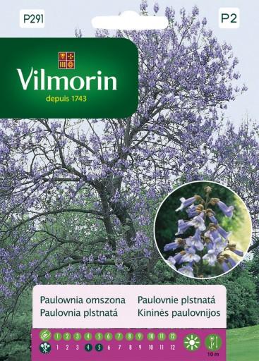 Paulownia omszona - Vilmorin-0