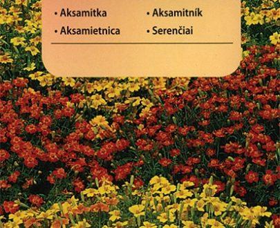 Aksamitka - MIX - Vilmorin-0