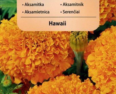 Aksamitka - Hawaii - Vilmorin-0