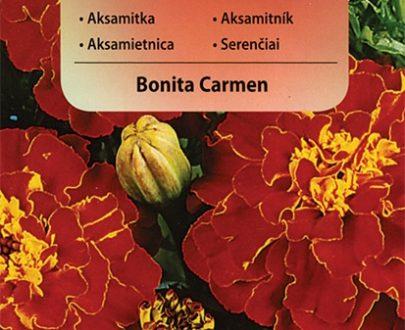 Aksamitka - Bonita Carmen - Vilmorin-0
