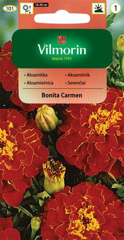 Aksamitka - Beata - Vilmorin-9476