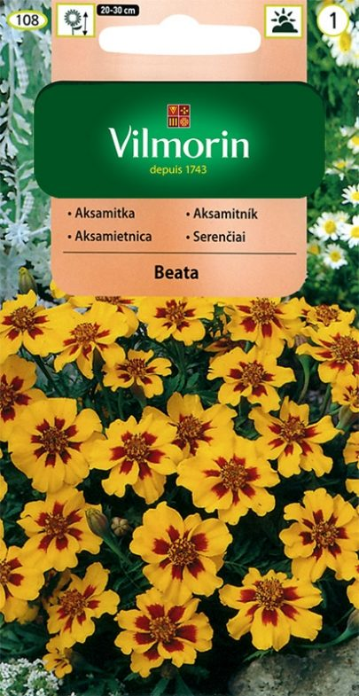 Aksamitka - Beata - Vilmorin-0