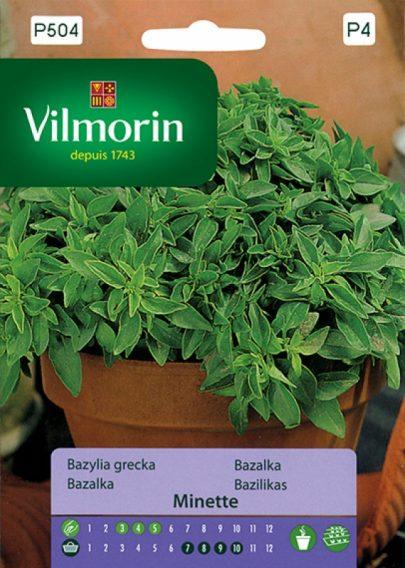 Bazylia grecka - Vilmorin-0