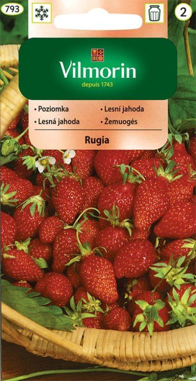 Poziomka - Rugia - Vilmorin-0