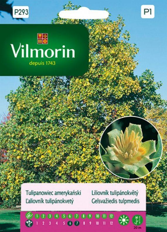Tulipanowiec amerykański - Vilmorin-0