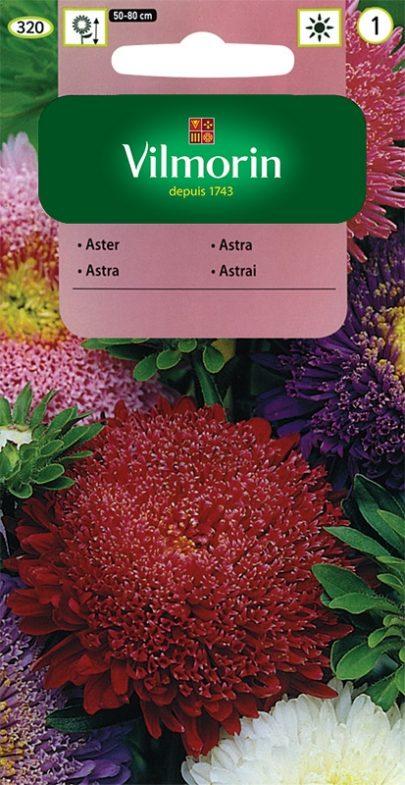 Aster - Vilmorin-0