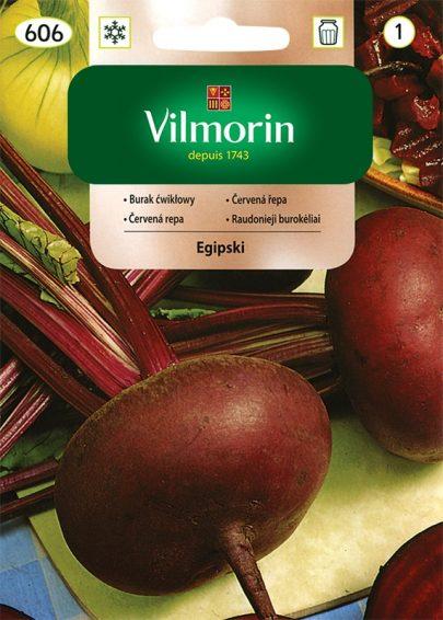 Burak ćwikłowy Egipski - Vilmorin-0
