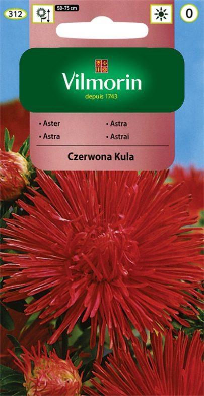 Aster Czerwona Kula - Vilmorin-0