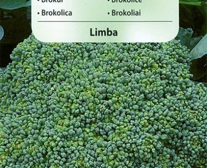 Brokuł - Limba - Vilmorin-0