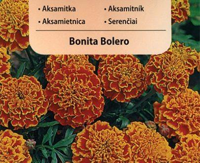 Aksamitka - Bonita Bolero - Vilmorin-0