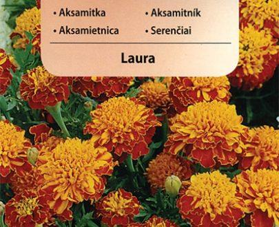 Aksamitka - Laura - Vilmorin-0