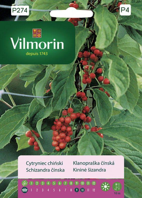 Cytryniec chiński - Vilmorin-0