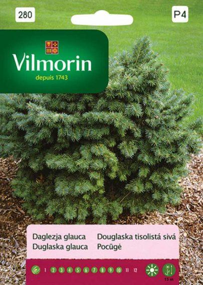 Daglezja glauca - Vilmorin-0