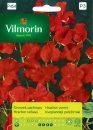 Groszek pachnący - Vilmorin-0