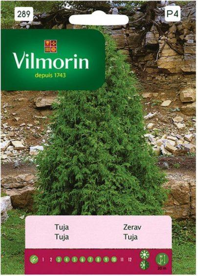 VILMORIN - TUJA - 0,3g-0